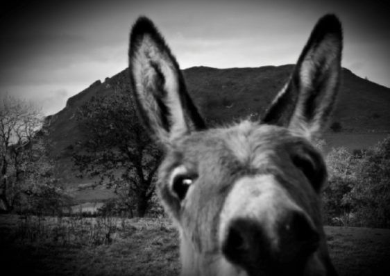 b&w donkey pic for blog