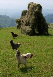 DSCF1213 orig hens copy